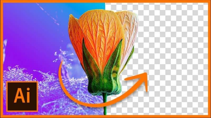 Elimina el fondo de una imagen en Adobe Illustrator CC.