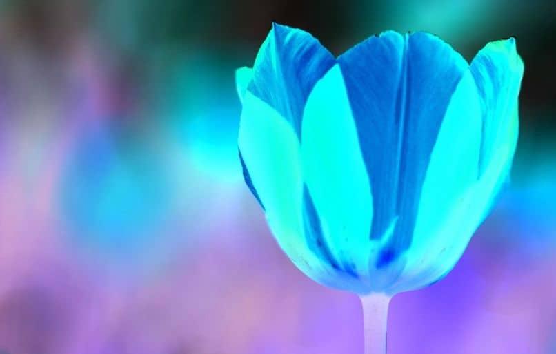Flor con colores invertidos