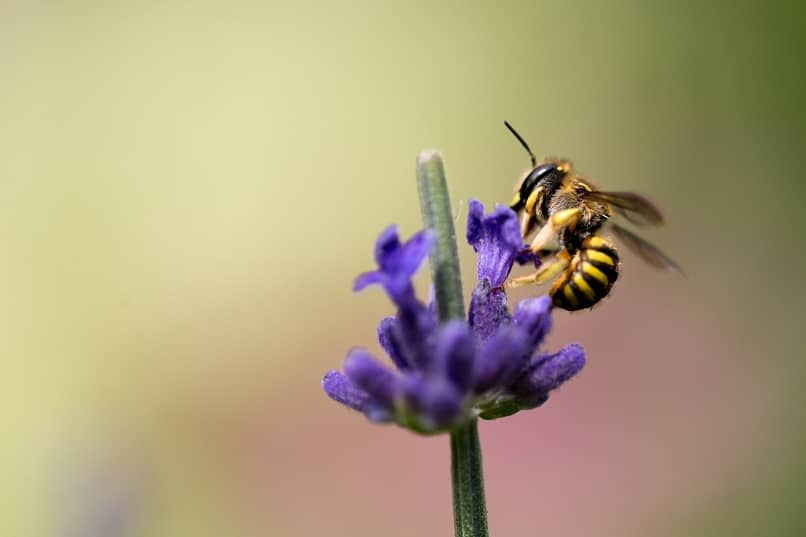 imagen de una abeja sobre una flor en HD