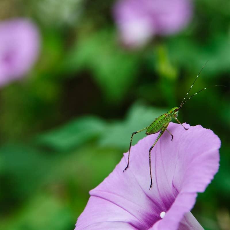 insecto foto borrosa