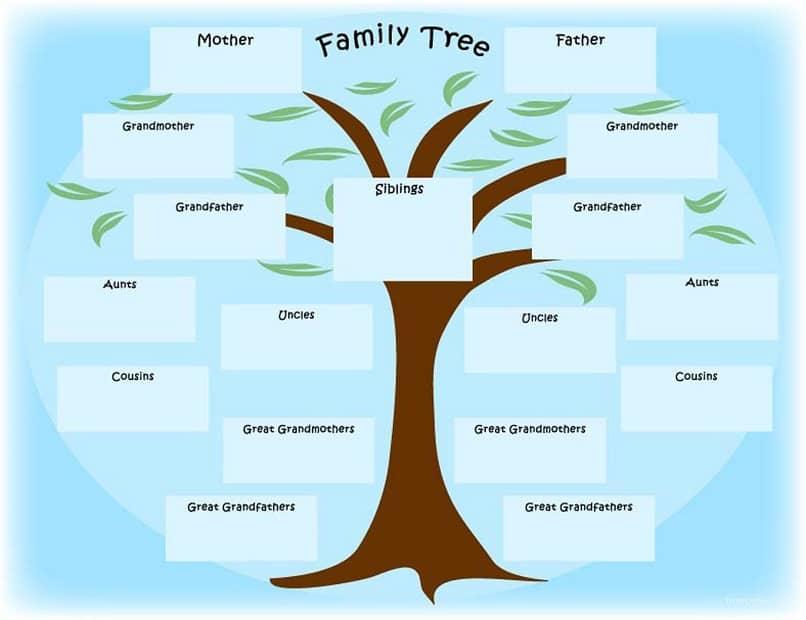 hizo un árbol genealógico