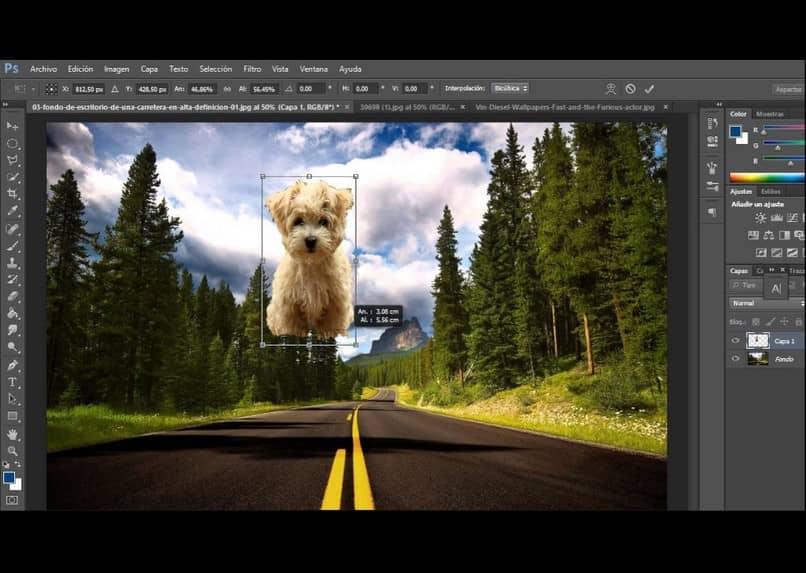 hacer un fotomontaje de un perro