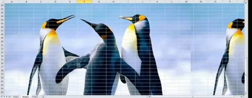 imagen de pingüinos como fondo de una hoja en excel