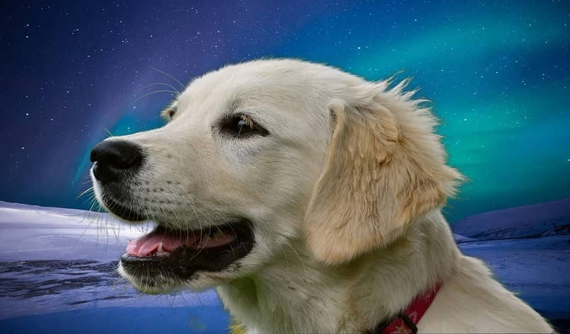 perro en montaje espacial