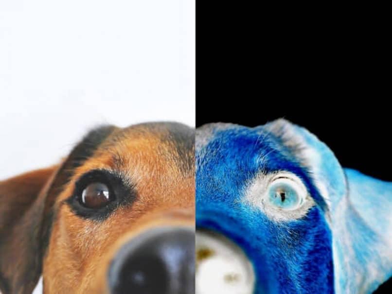 Imagen invertida de un perro